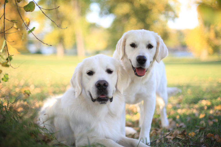 IG_Feature_Image_Goldens